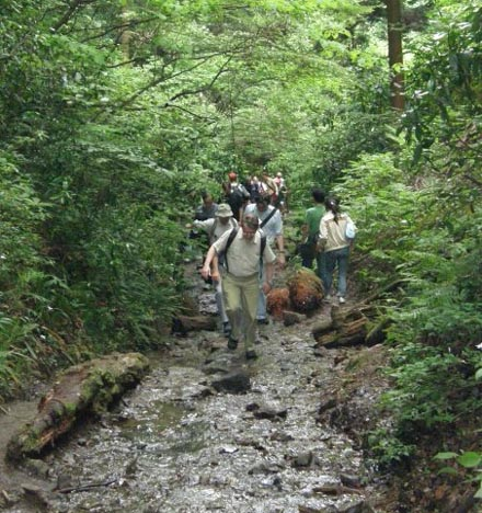 Mt Takao & Ukai Toriyama - stream